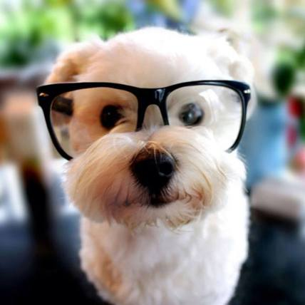dogs-in-glasses-5